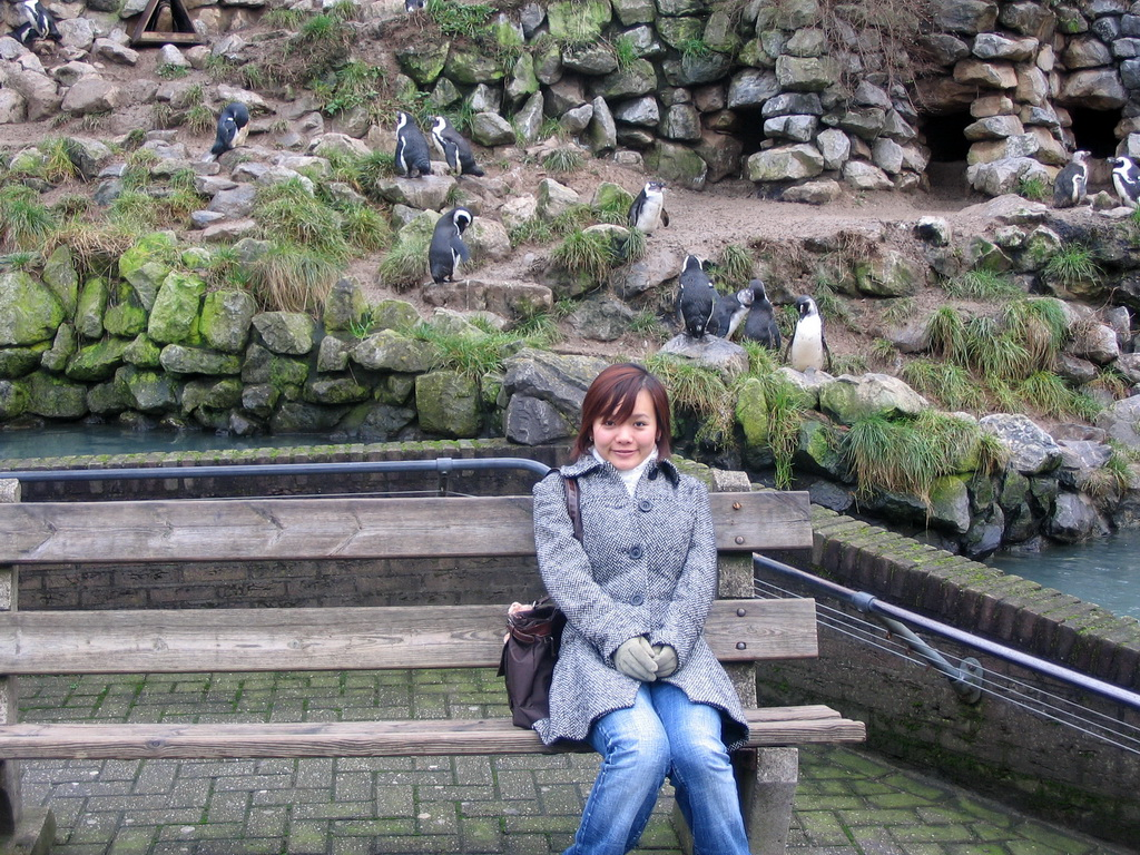 Miaomiao with African Penguins at Burgers` Zoo