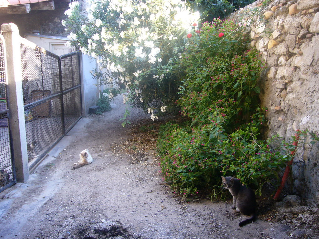 Cats and plants in an alley in the city center