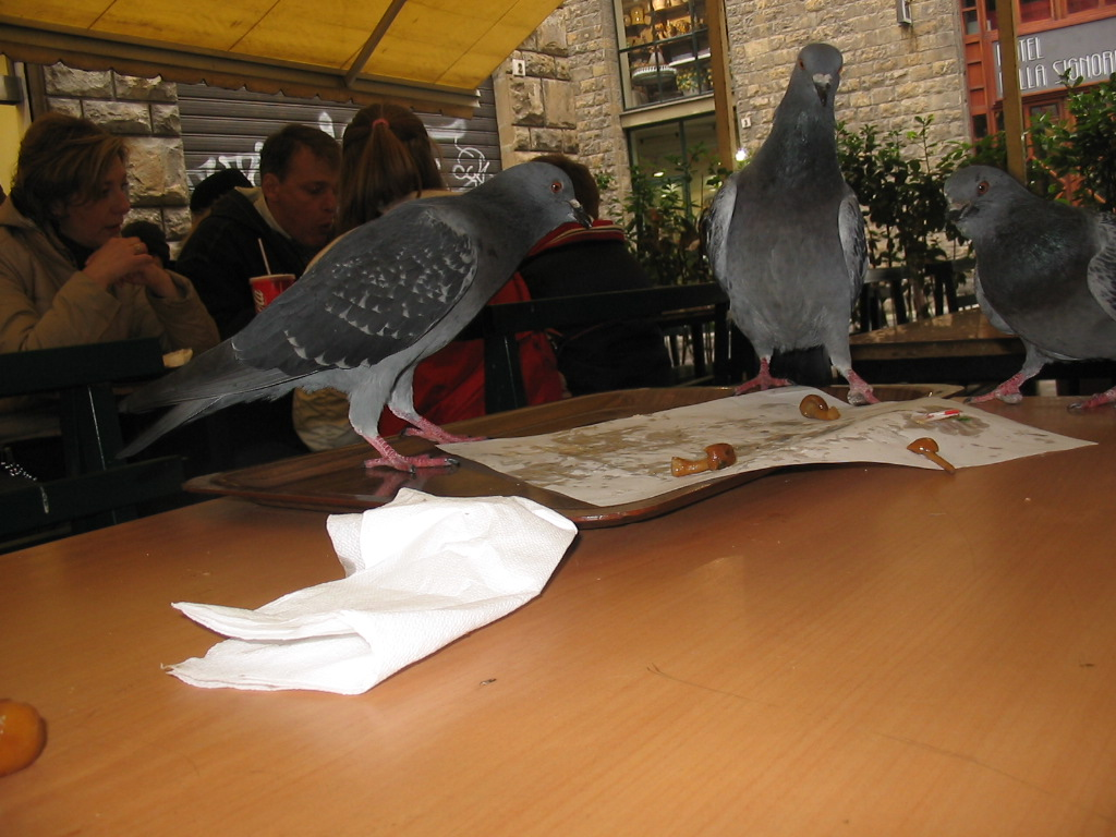 Pigeons on a table at the terrace of the restaurant of the Hotel della Signoria at the Via delle Terme street