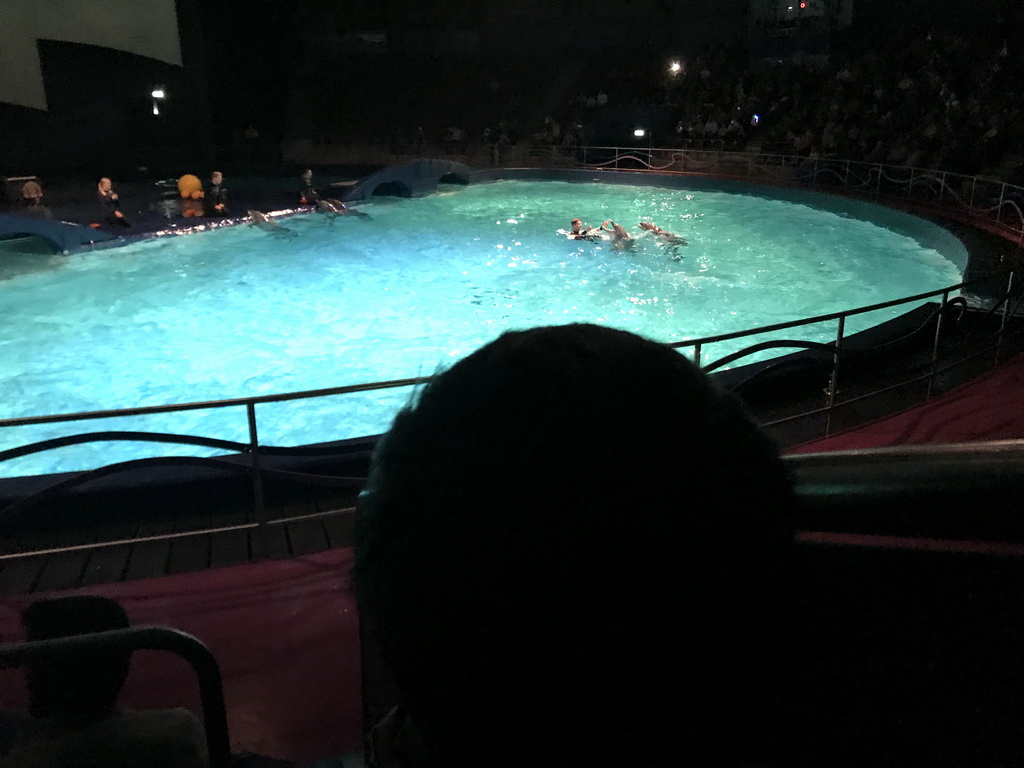 Max looking at the Zookeepers and Dolphins during the Aqua Bella show at the DolfijndoMijn theatre at the Dolfinarium Harderwijk