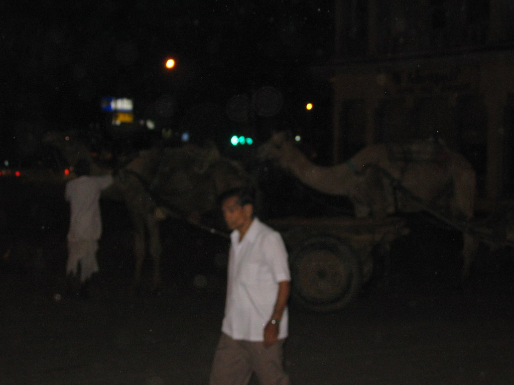 Camels at Bhagwan Das Road, by night