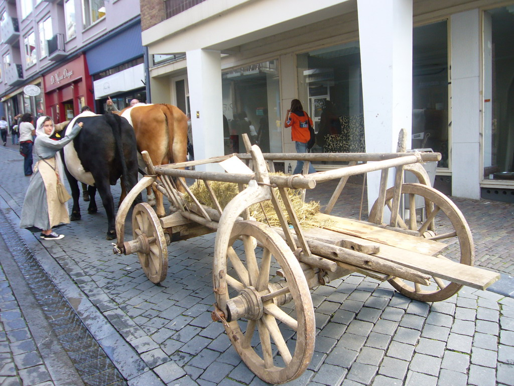 Person in medieval clothes, oxen and carriage at the Houtstraat street, during the Gebroeders van Limburg Festival