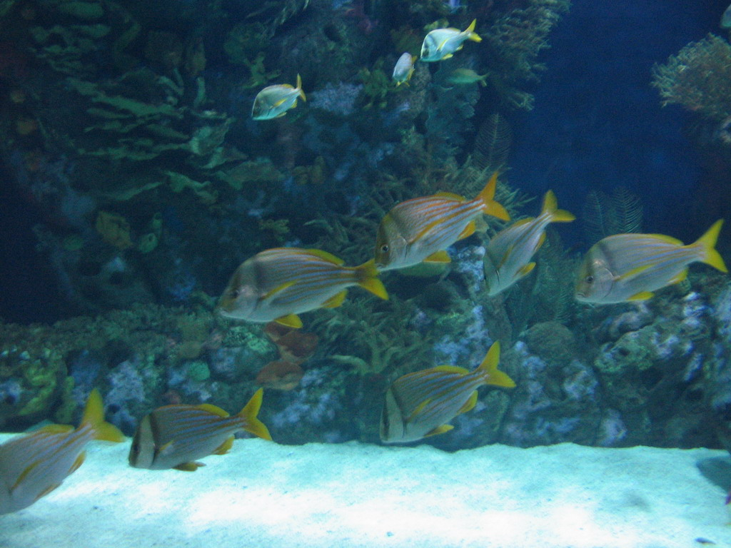 Fish at the Oceanogr�fic aquarium at the Ciudad de las Artes y las Ciencias complex