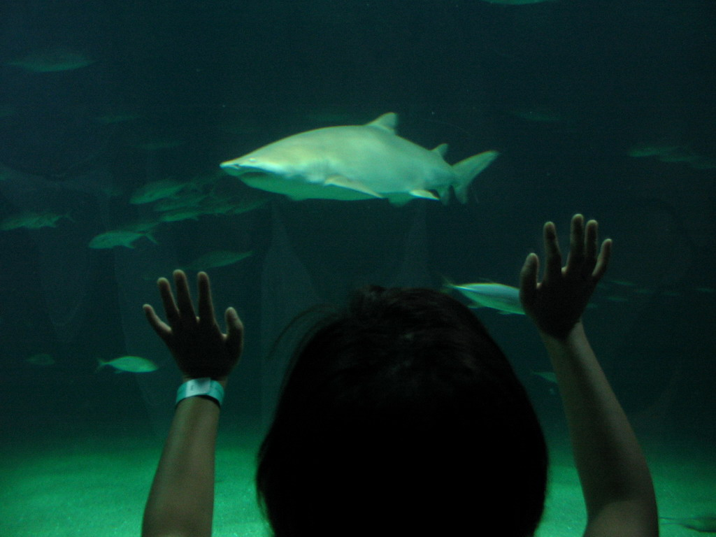 Miaomiao with Sharks at the Oceanogr�fic aquarium at the Ciudad de las Artes y las Ciencias complex